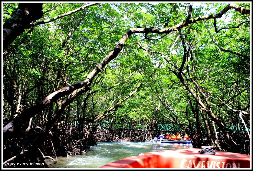 Mangroves of Bartang Island